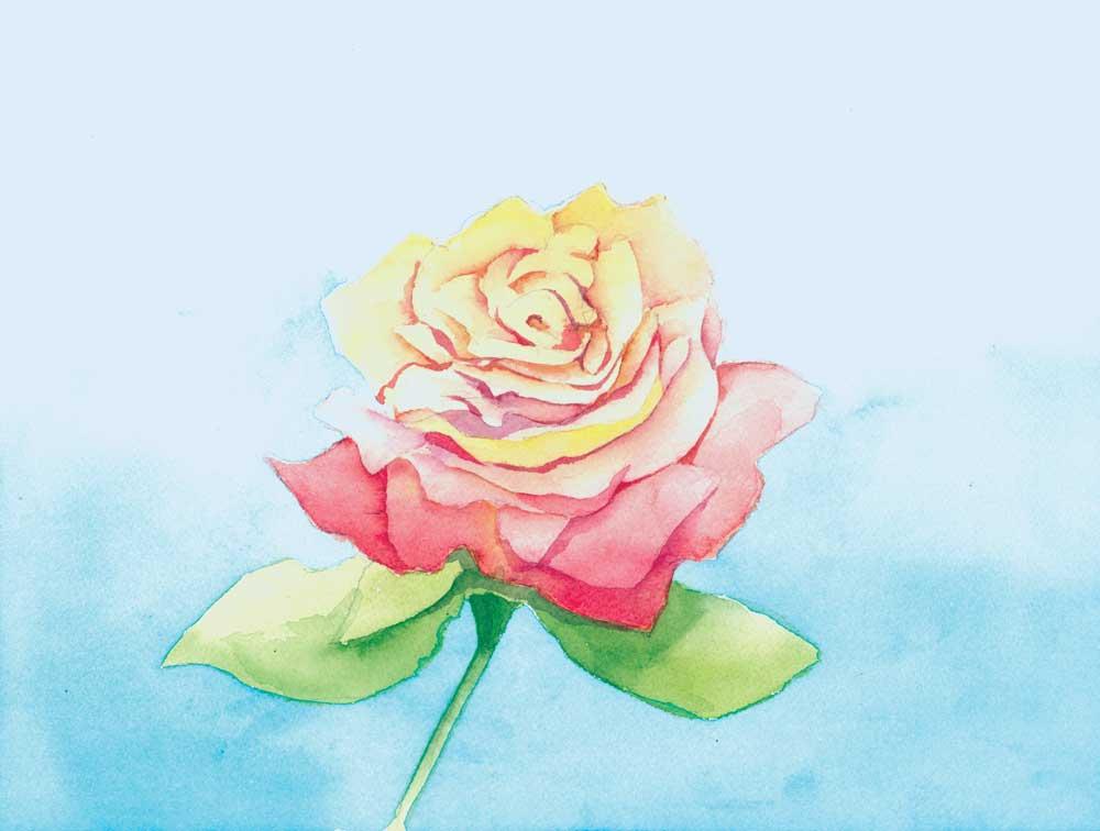 rose-7-14